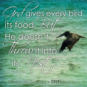 God give bird its food